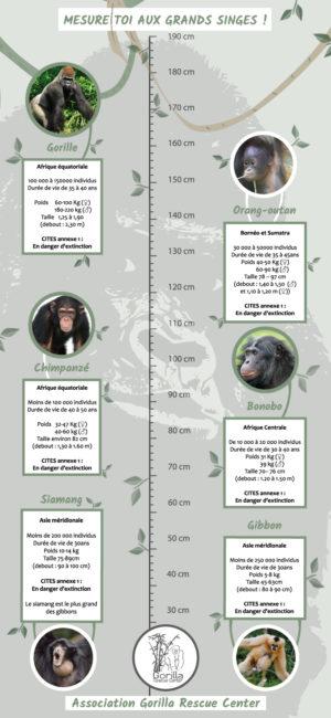Toise - Outil pédagogique réalisé pour l'Association Gorilla Rescue Center - Dimensions réelles : 200 cm sur 100 cm